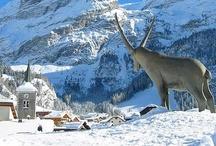 Perle des Alpes / Pralognan la Vanoise est membre du réseau Alpine Pearls, label favorisant la mobilité douce dans les stations villages des Alpes.