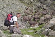 Faune sauvage en Vanoise / Quelques animaux de Vanoise que vous rencontrerez au détour d'une randonnée à Pralognan la Vanoise
