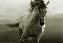 Equus** / #Equine #Horses / by Christopher Bentley**