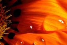arancio.... mandarino.... cognac....
