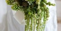 Morsiuskimput - vihreä