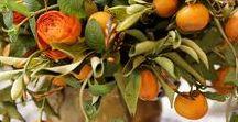 Hääkukat - oranssi