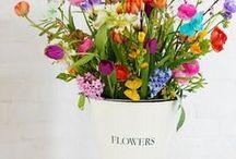 flowers / by Annemarie van den Boom