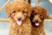 Cachorros - Dogs