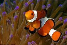 Peixes - Fish