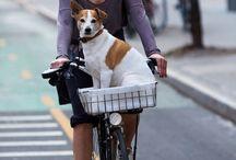Ride a bike / Ikonikus darabok, amièrt érdemes nyeregbe pattani:)