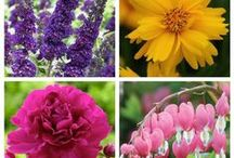Gardening Tips / Gardening can be very simple. This collection of garden tips helps you grow beautiful flowers and plants.