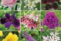 The Longfield Gardens Blog / Inspiration, tips and fun information about gardening updated on a weekly basis.