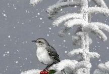 Peace & Nature