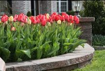 Around The House - Spring Flower Bulb Inspiration / Fall is for planting to enjoy beautiful spring flower bulbs!
