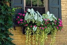 Caladiums / Foliage color can bring your garden and containers a whole, new gorgeous dimension. Cannas, Caladiums and Elephant Ears are a must-have in any garden.