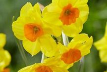 Orange & Yellow Flowers