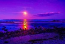 The Color Purple / Anything purple / by Shirley Richer