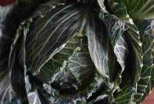Chameleon Ingrédients / Les produits bruts cuisinés au Chameleon