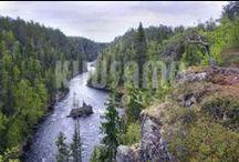 Bosques / Vivimos del bosque, por eso en Kuusamo Log Houses hacemos un uso responsable de sus recursos.