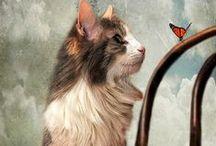 Art - Cats 1