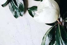 plants / Flowers, trees, plants