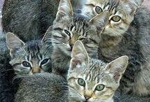 Katten en kittens / Katten en kittens