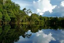 The Amazon / One of the worlds greatest natural resources- Welcome to the Amazon.