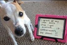 Shame Doggie-we love you