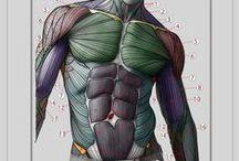 Anatomy (Body) / 몸 관련 해부학