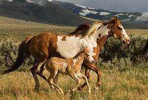 Horses(: / by Katie Bedbury