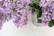 kukat . flowers . fleur