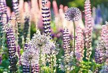 Tuin/bloemen / De mooiste bloemen uit eigen tuin en om mij heen.