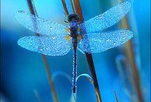 Dragon fly / libelle