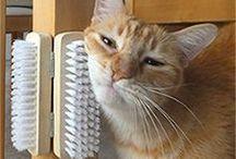 猫との生活ヒント / 参考にしたい