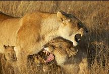 Great Wildlife Photos / Selection of great wildlife images from the best wildlife photographers