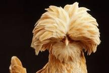 Birds - Chicken, Turkey, etc / by Sedi