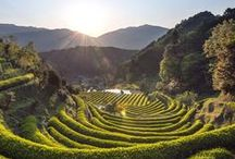 Japan / by Emilie Routier
