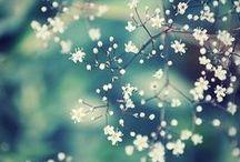 beautiful flower pics
