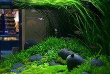 Aquarium, mořská biologie