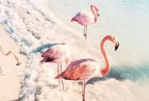 Birds / Favorite birds curated by American in Paris watercolor illustrator and food stylist Jessie Kanelos Weiner. Bird fashion photography, flamingo, beautiful bird photography, nature