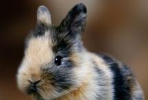 I want a bunny so bad! / by LAURA SHARP