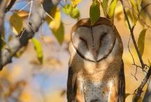 Owls Hooo Give a Hooot / Great Owl Photos / by THE Canadian Personal Finance Site
