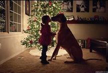 Pets in Christmas / Merry dogs' Christmas