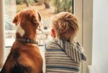 Pet Love Moment / Sweet moments with pets