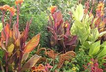 Heading for the Tropics / Our favorite tropical gardens and tropical plants - Cannas, Elephant Ears, Calla Lilies and more!