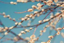 Spring / All Spring inspiration