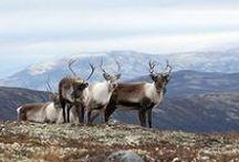 Rondane Nationalpark / Rondane Nasjonalpark begynner få kilometer fra hotellet - vi nyter utsikten inn i de blå fjellene