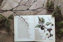 本のある風景