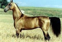 Hayvanlar Alemi (Animals World) / Unlimited pinning, no block, E N J O Y :))) / by Şule Tumer Eroz