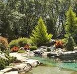 Water Sanctuary