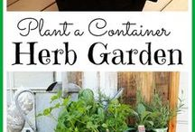Herb Gardens / All things herby!
