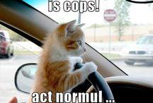 Funny Cats' / Katten
