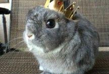 April the bunny