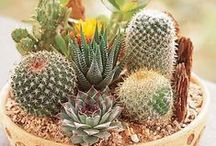 çiçek saksı yaratıları / Her türlü kutlama, davet, düğün, nişan ve toplantılar için sipariş alınmaktadır. Cep:05334948876